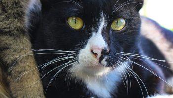 Quanto tempo vive um gato?