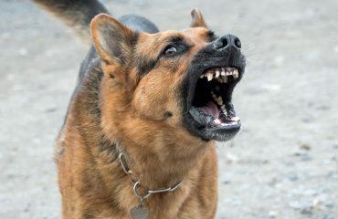 O que fazer quando cachorro não para de latir