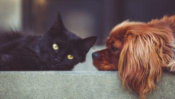As 5 intoxicações mais comuns em cães e gatos