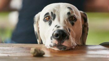 Alimentação saudável para cães idosos inclui fibras