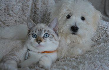 outubro rosa tumor em cadelas e gatas