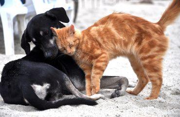 como adaptar cão e gato na mesma casa?