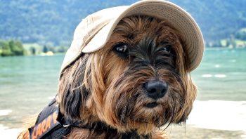 7 Cuidados com o cachorro no verão