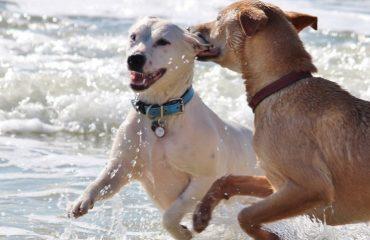 Cuidados com o cachorro antes da praia