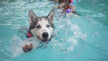 Cuidados com o cachorro no verão