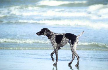 Cuidado beira do mar é perigoso para seu cão