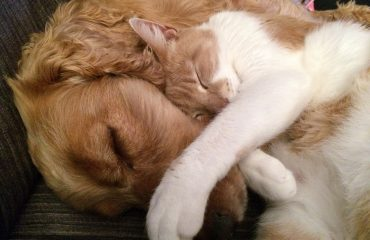 ter mais um cachorro ou gato em casa