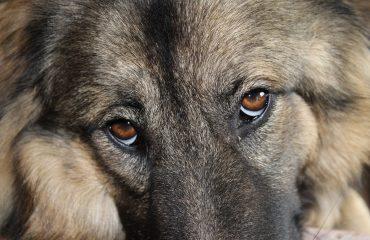 Os 7 sinais que o cão usa para falar com o dono