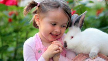como cuidar de coelhos de estimação