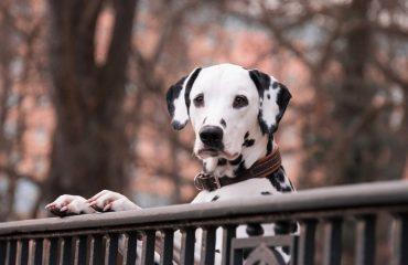 11 sinais que podem indicar câncer em cachorros