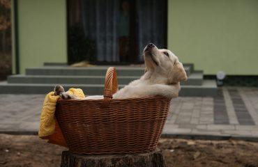 12 dicas para agradar cachorros