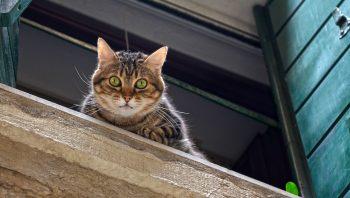 Cuidados com o gato no dia da mudança de casa