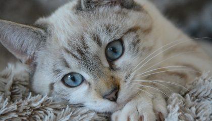 11 sinais de que o gato gosta do seu dono