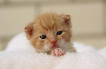 Leite faz mal para gatos