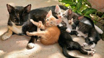 Os cuidados com a gata grávida