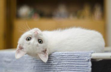Como agradar gatos: 12 dicas para uma rotina feliz
