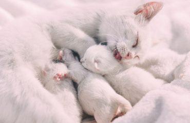 O que acontece em parto normal de gatos