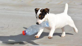 7 dicas para deixar o cachorro feliz