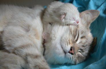 Como tirar placenta de cachorro e gato