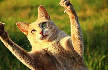 10 atitudes que deixam o gato mais irritado
