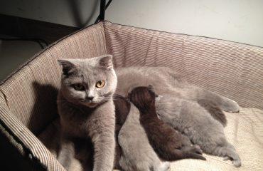 Quando a gata pode cruzar