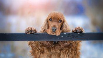 cadela que amamenta pode ter tumor de mama