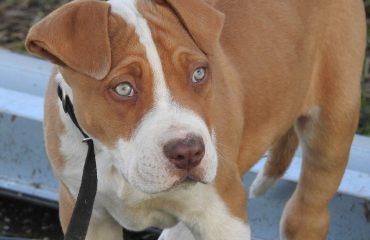 Filhote de cachorro com diarreia