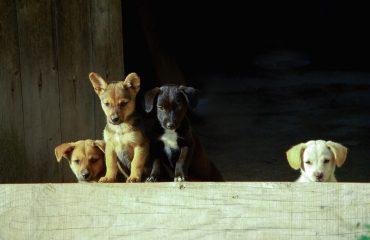 As doenças mais comuns dos cachorros