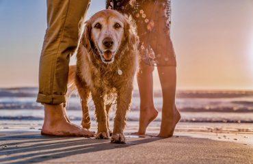 Quantos anos vive um cachorro?