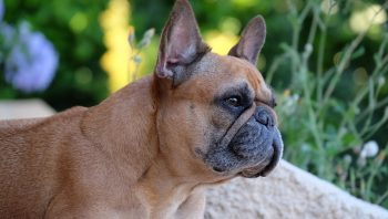 Como saber se o cachorro tem câncer