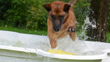 Pode dar banho em cadela no cio