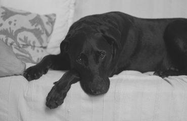 Luto do cachorro: saiba o que fazer quando perde o tutor ou companheiro