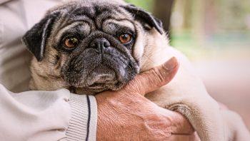 Cuidados com o cão idoso, saiba como facilitar a vida dele