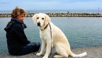 Como adaptar o cachorro ao novo dono