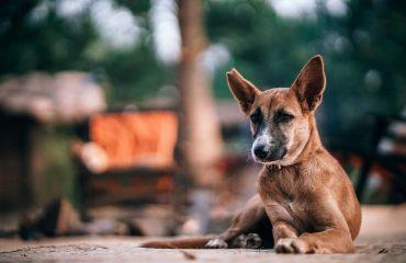 Holanda é o primeiro país a acabar com os animais de rua