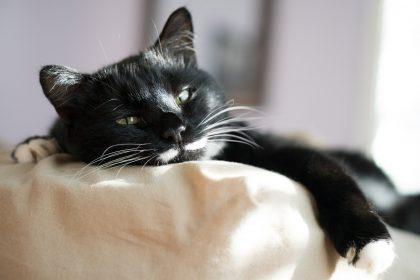 Por que gatos dormem muito?
