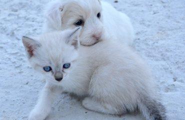 Parvovirose canina passa para gatos?