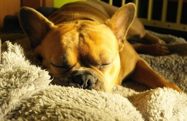 Como curar ferida de cachorro com tratamento caseiro