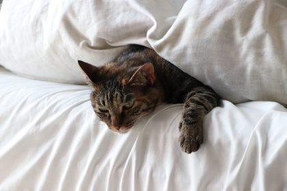 Faz mal dormir com o gato?
