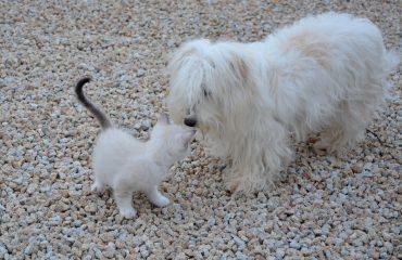 Como adaptar filhote de gato e cachorro na mesma casa