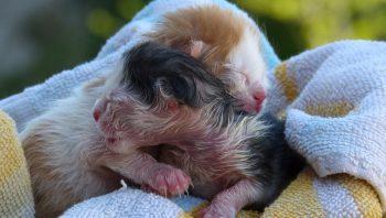 O que filhote de gato recém-nascido pode comer