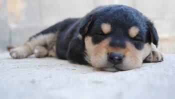 Como fazer filhote de cachorro parar de chorar à noite