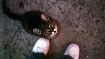 Por que gatos se esfregam nas pernas dos donos?