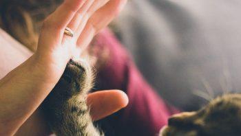 Como saber se o gato gosta do dono