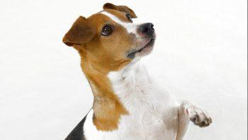 Qual antibiótico para pata de cachorro quebrada?Qual antibiótico para pata de cachorro quebrada?