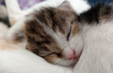 Como saber se o gatinho é macho ou fêmea