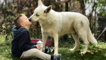 Por que cachorros lambem seus donos?