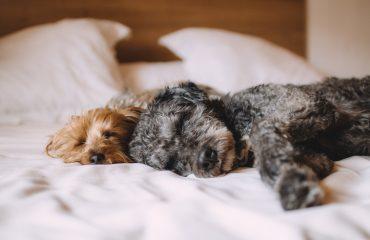Faz mal dormir com cachorro no quarto do dono?