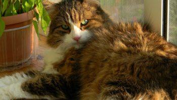 Como saber se o gato não gosta de você