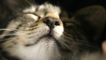 Por que gatos gostam de tomar sol?